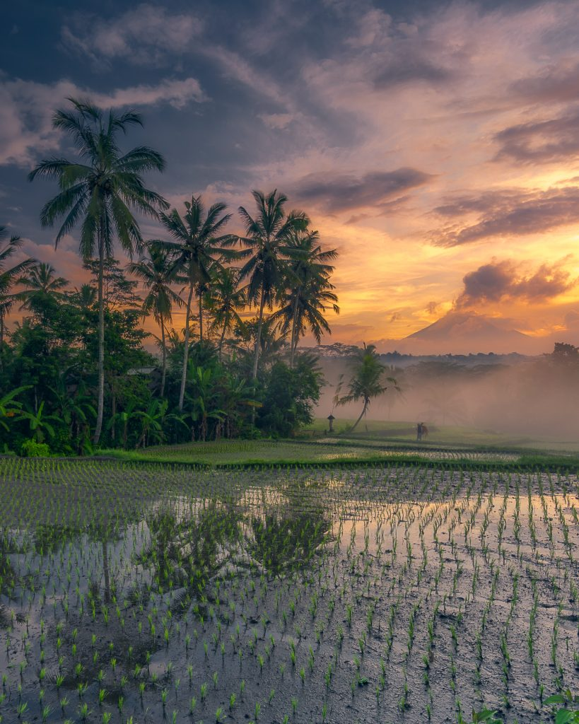 Foggy Morning at the Rice Paddies with the Majestic Mount Agung